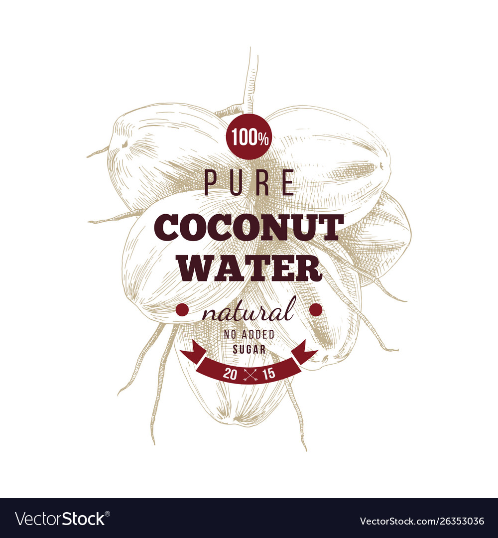 Cococnut water label over hand drawn coconut bunch