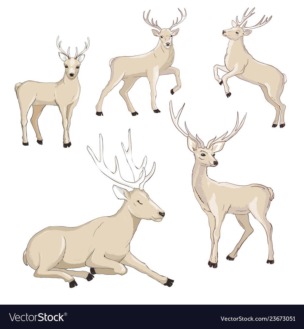 Cute deer cartoon set wildlife character