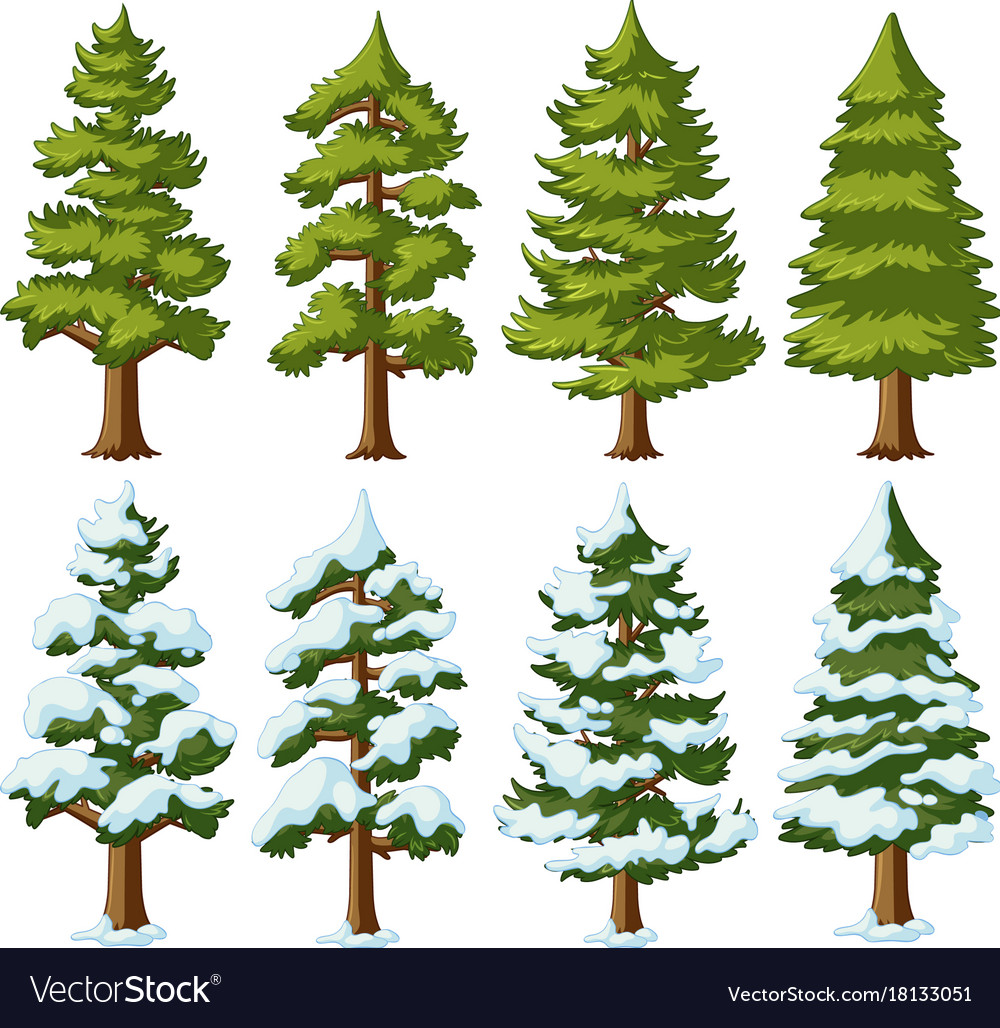 Different Shapes Pine Trees Royalty Free Vector Image Regular price $25.00 sale price $14.00. vectorstock