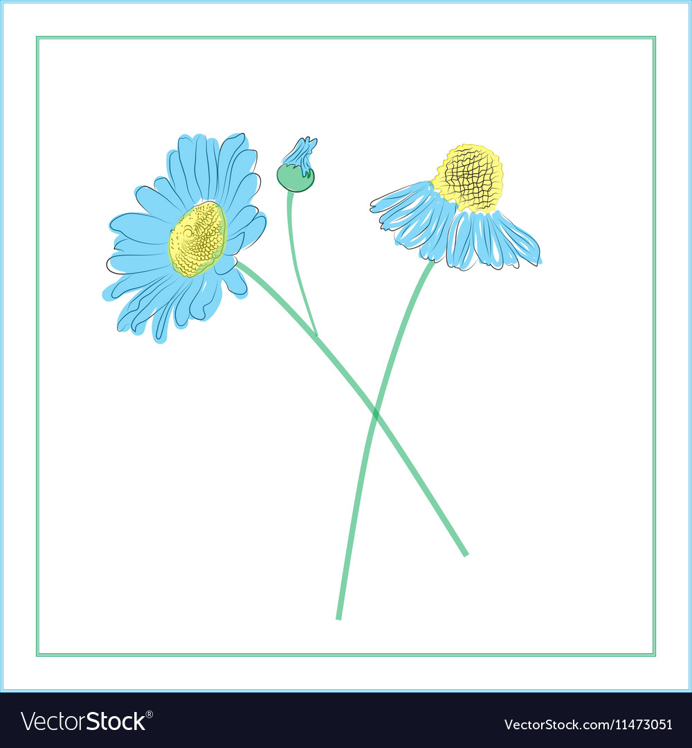 Hand Drawn Daisies Flowers Royalty Free Vector Image