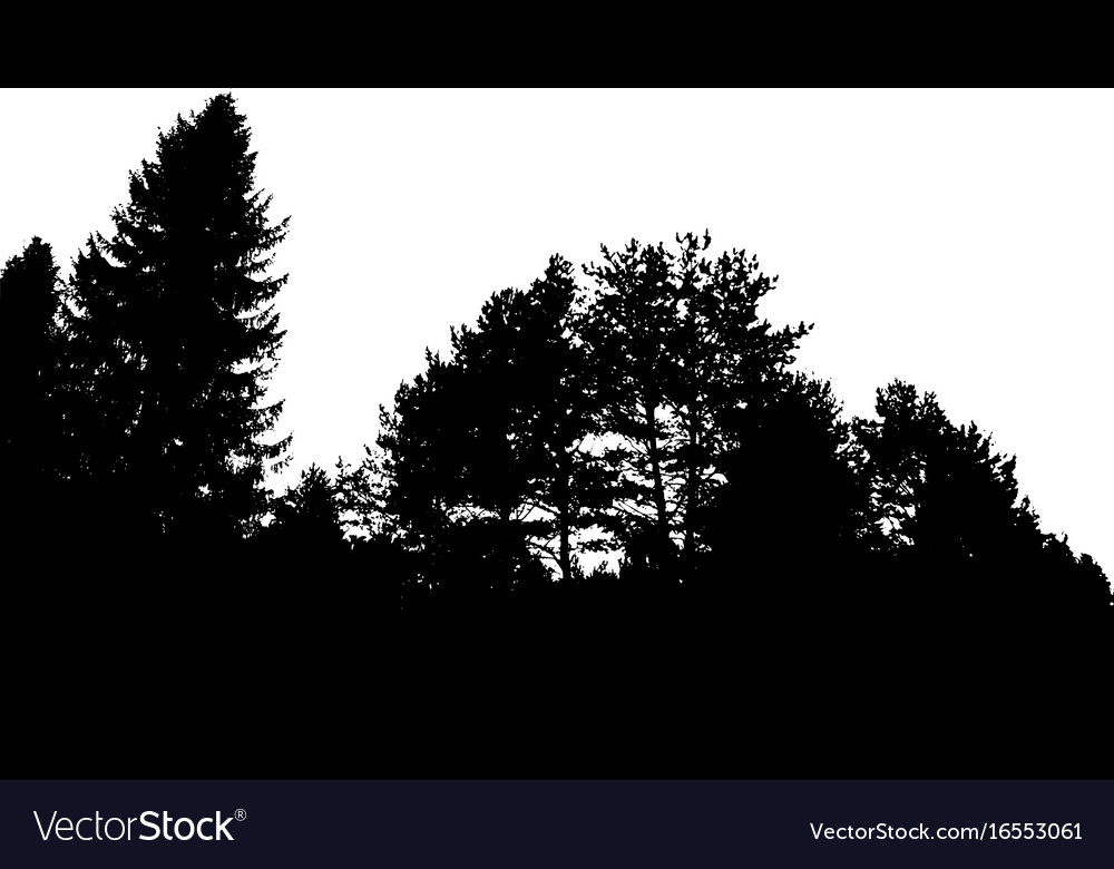 Black forest silhouette isolated on white vector image