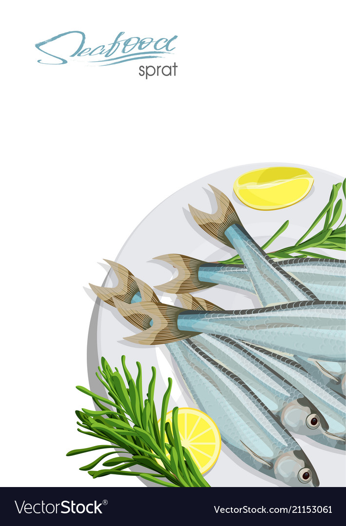Sprat sketch fish icon isolated marine