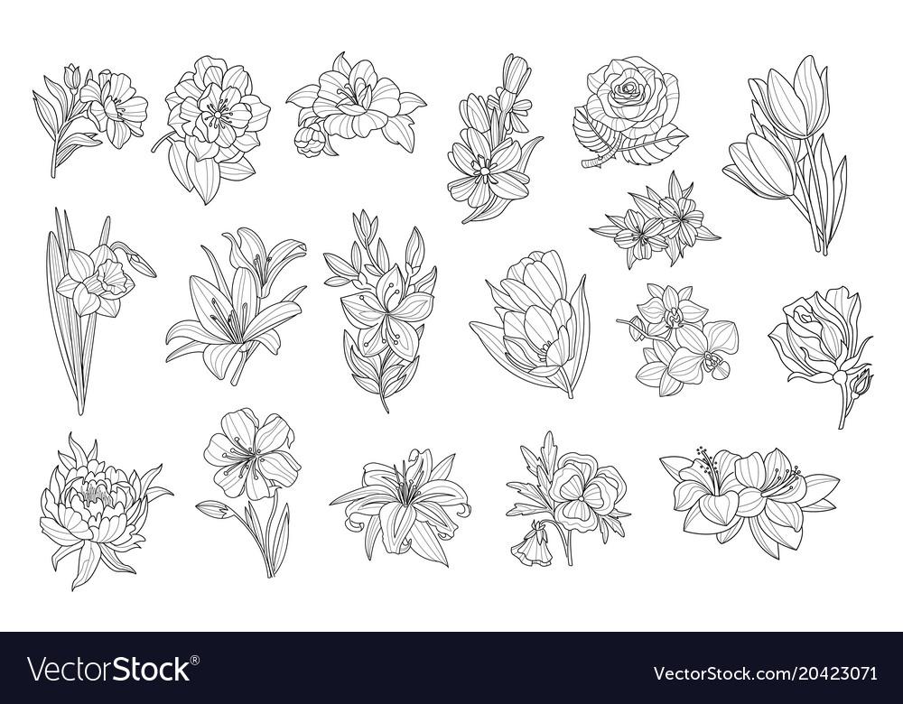 Set of beautiful monochrome flowers lily tulip
