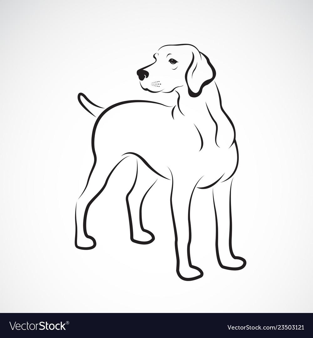 Labrador Dog On White Background Pet Animals Easy Vector Image