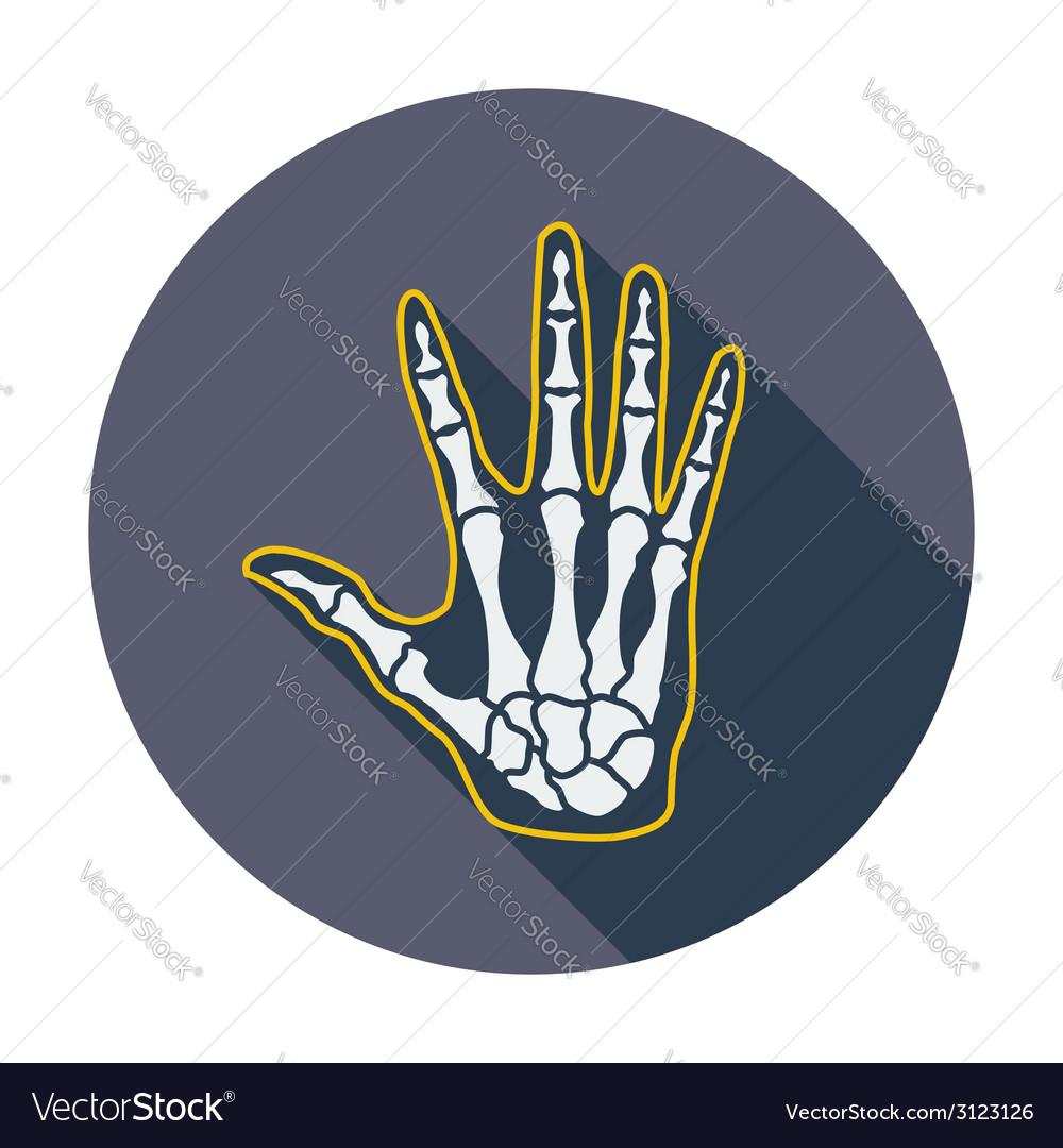 Anatomy hand Royalty Free Vector Image - VectorStock