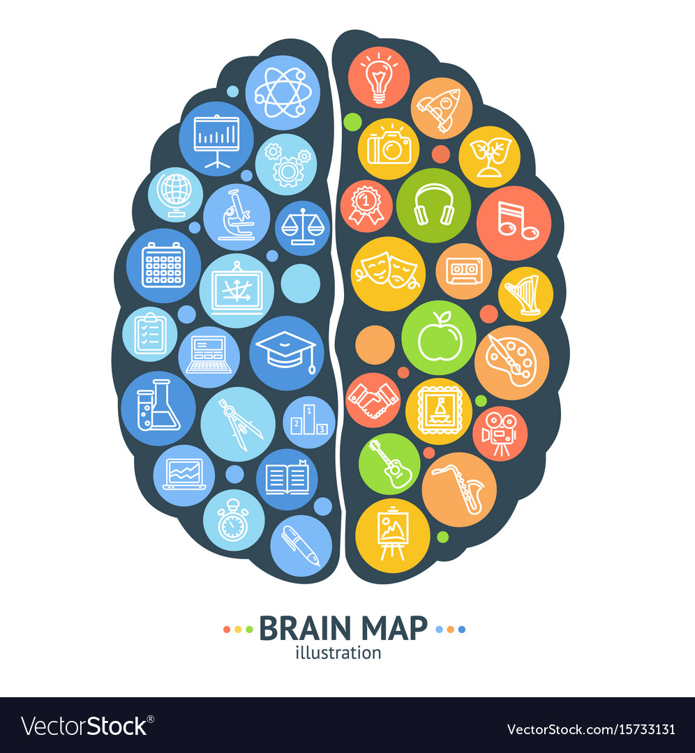 Human Brain Map Concept Left And Right Hemisphere Vector Image