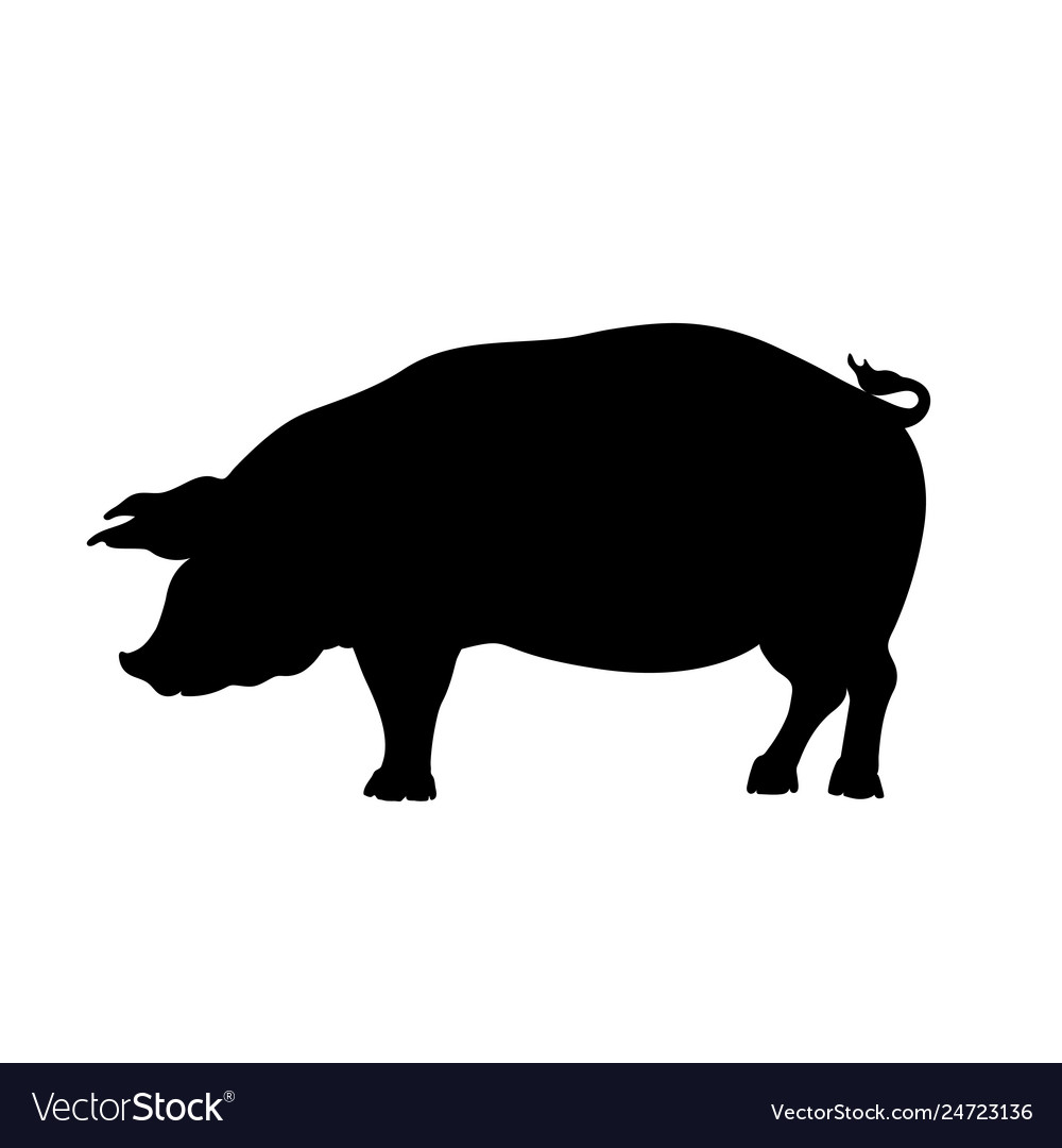 Black silhouette pig isolated image