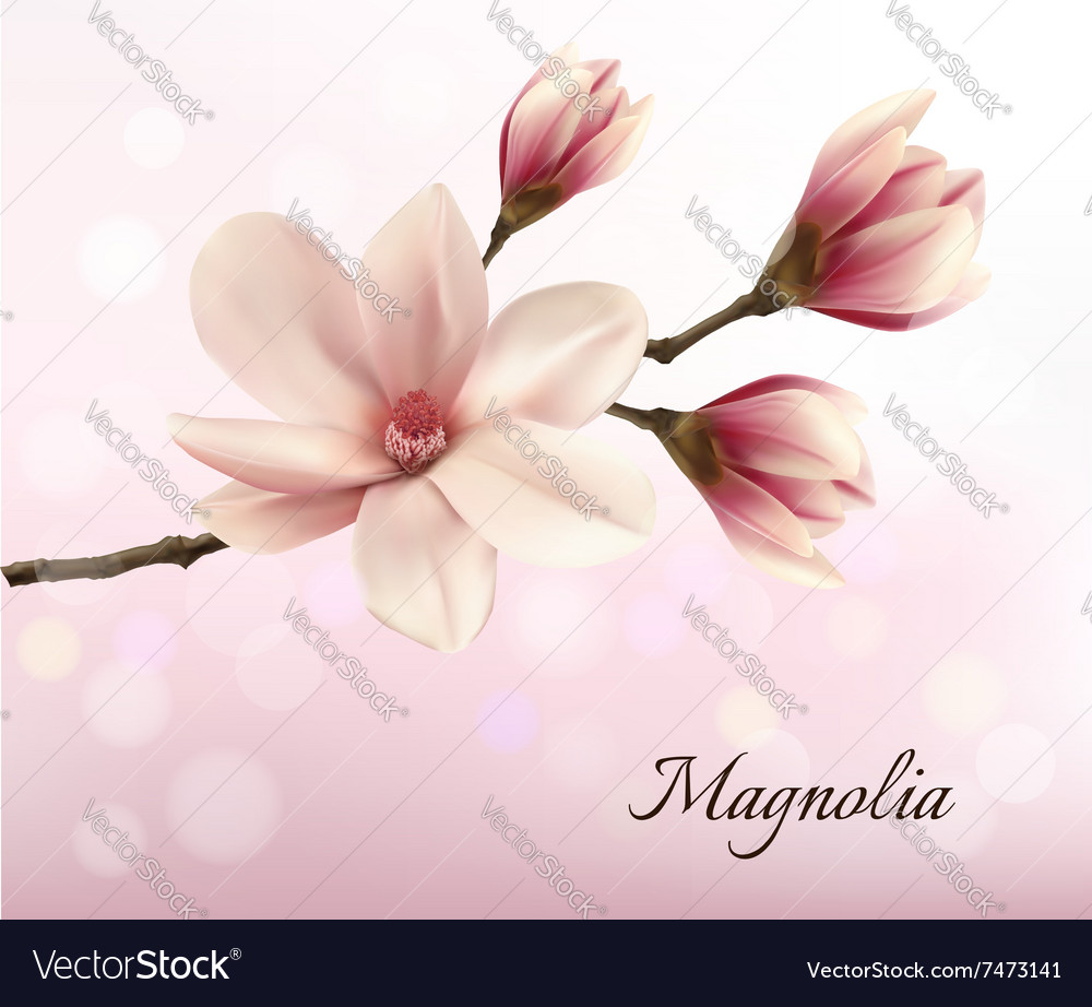 Branch with two pink magnolia flowers royalty free vector branch with two pink magnolia flowers vector image mightylinksfo