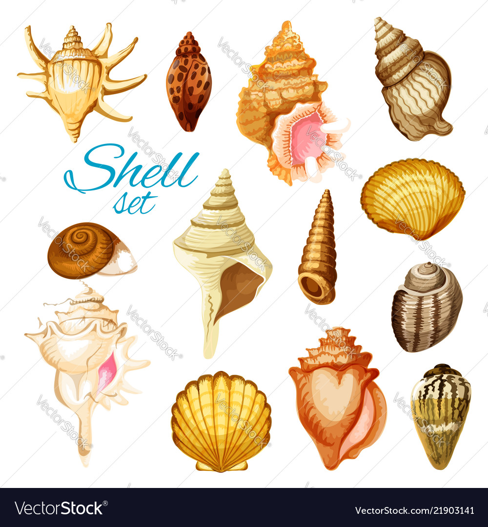 Cartoon seashell and sea mollusk animals