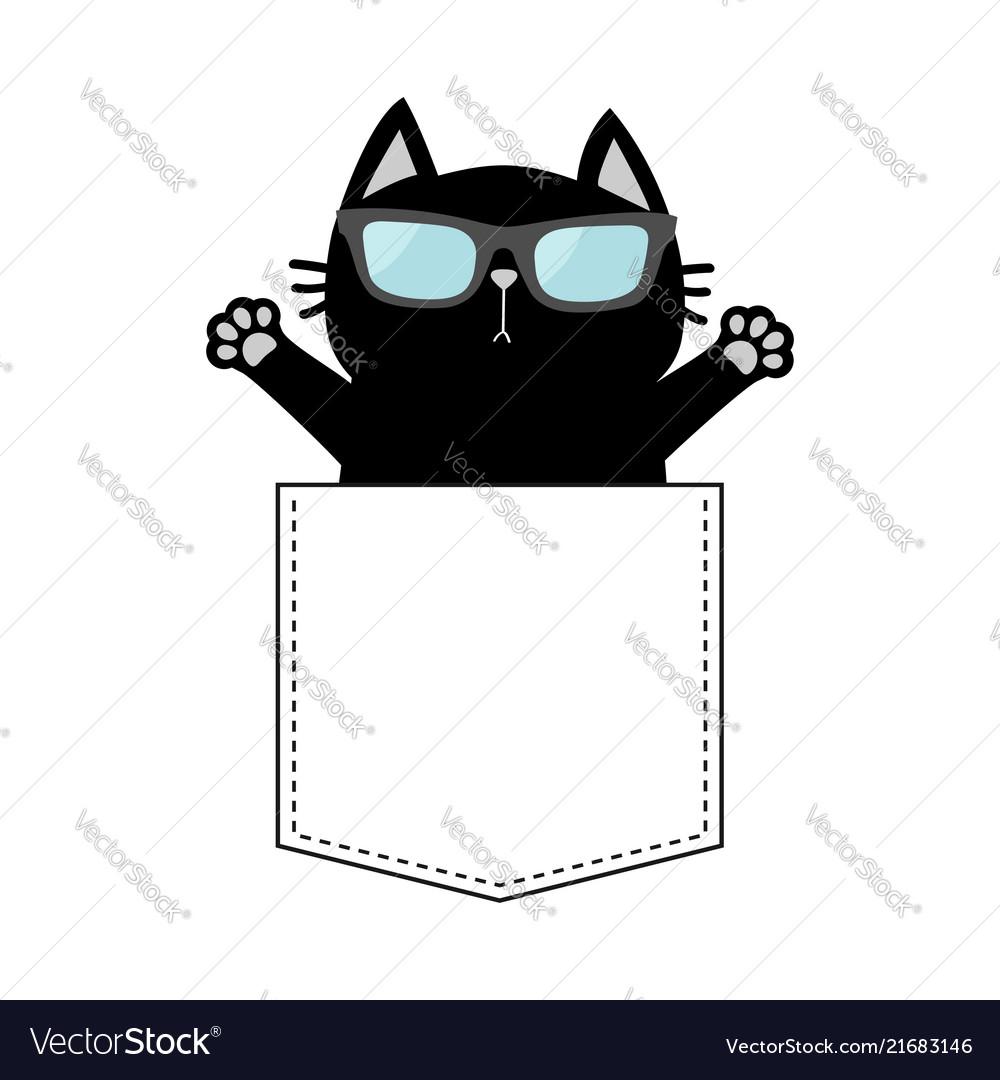 Cute black cat in the pocket wearing sunglasses