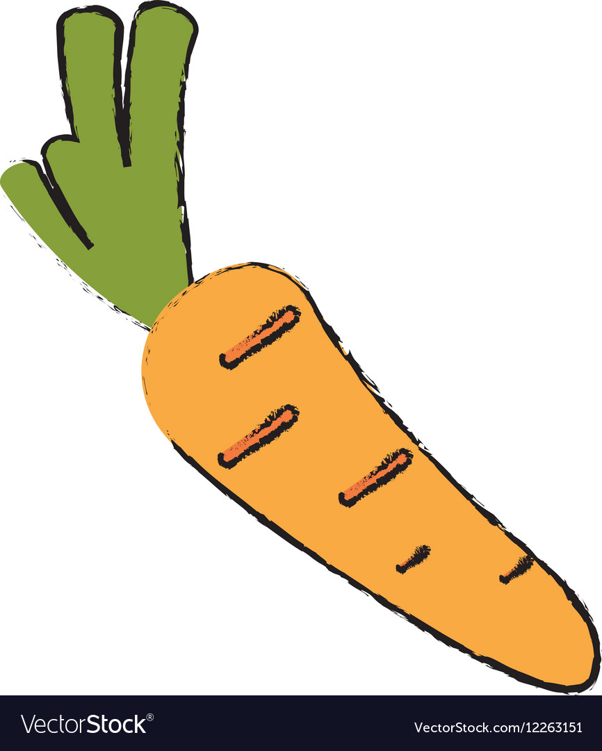 Drawing harvest carrot vegetable icon