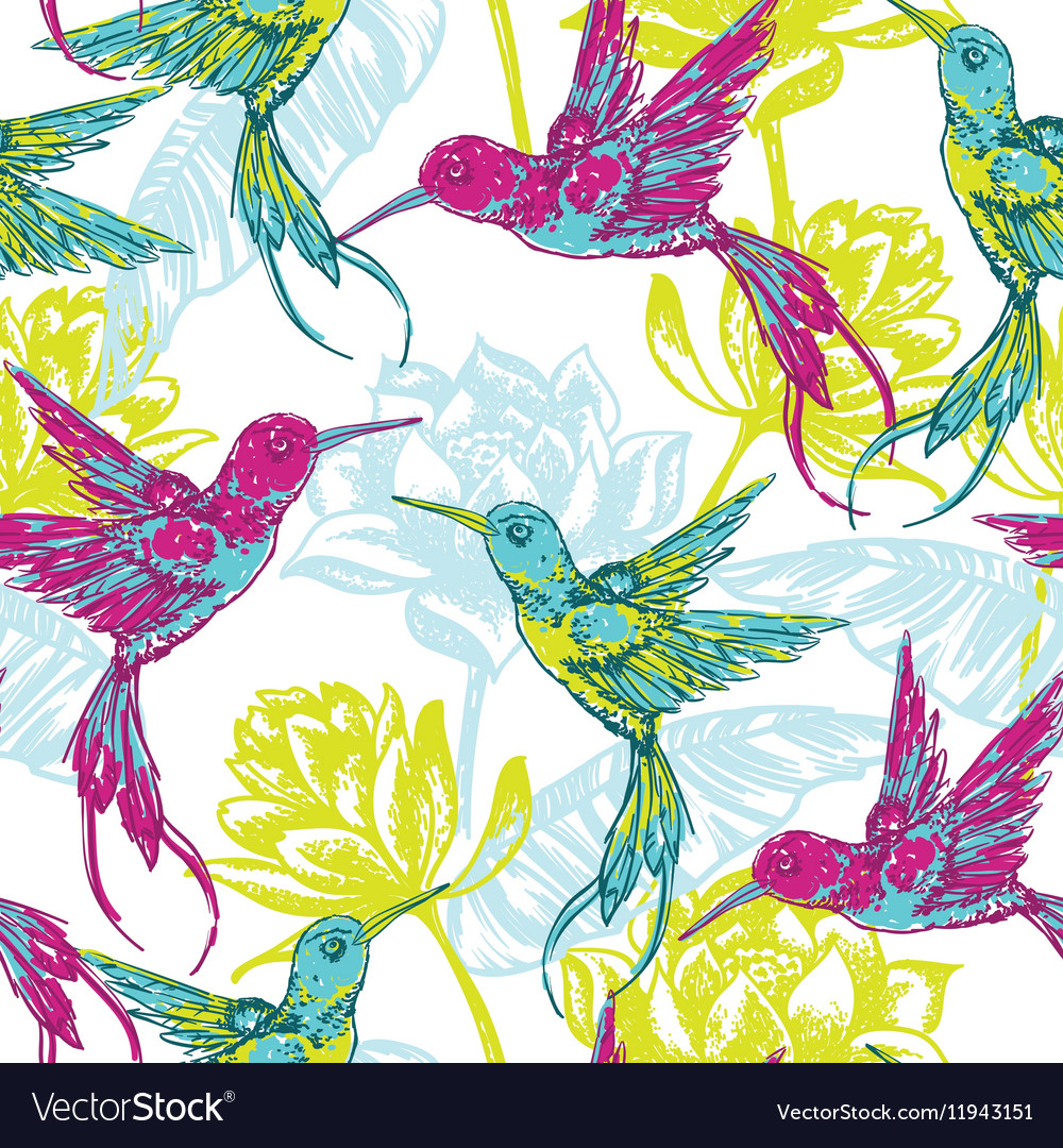 Hand draw tropical background with colibri bird vector image