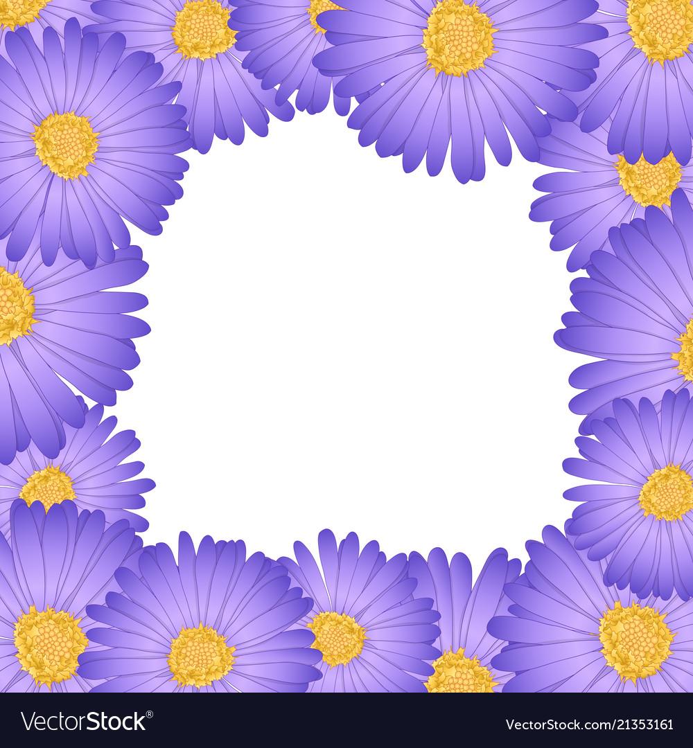 Purple Aster Daisy Flower Border Royalty Free Vector Image