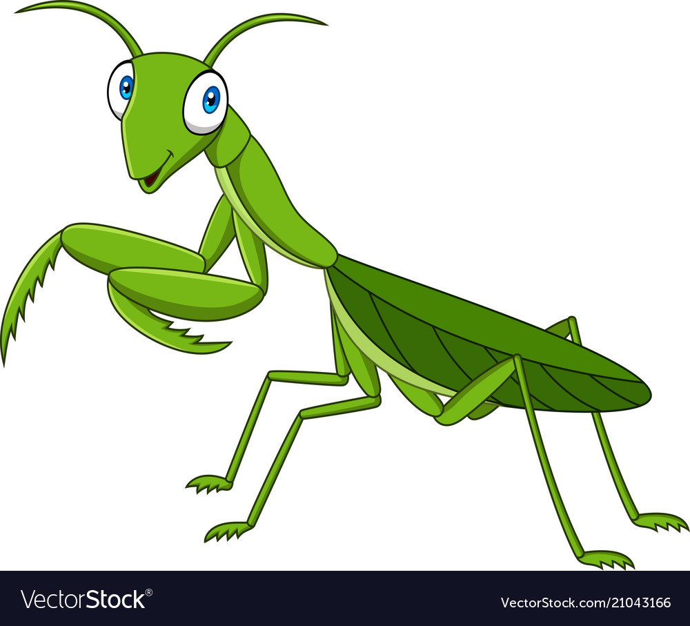 Cartoon green mantis