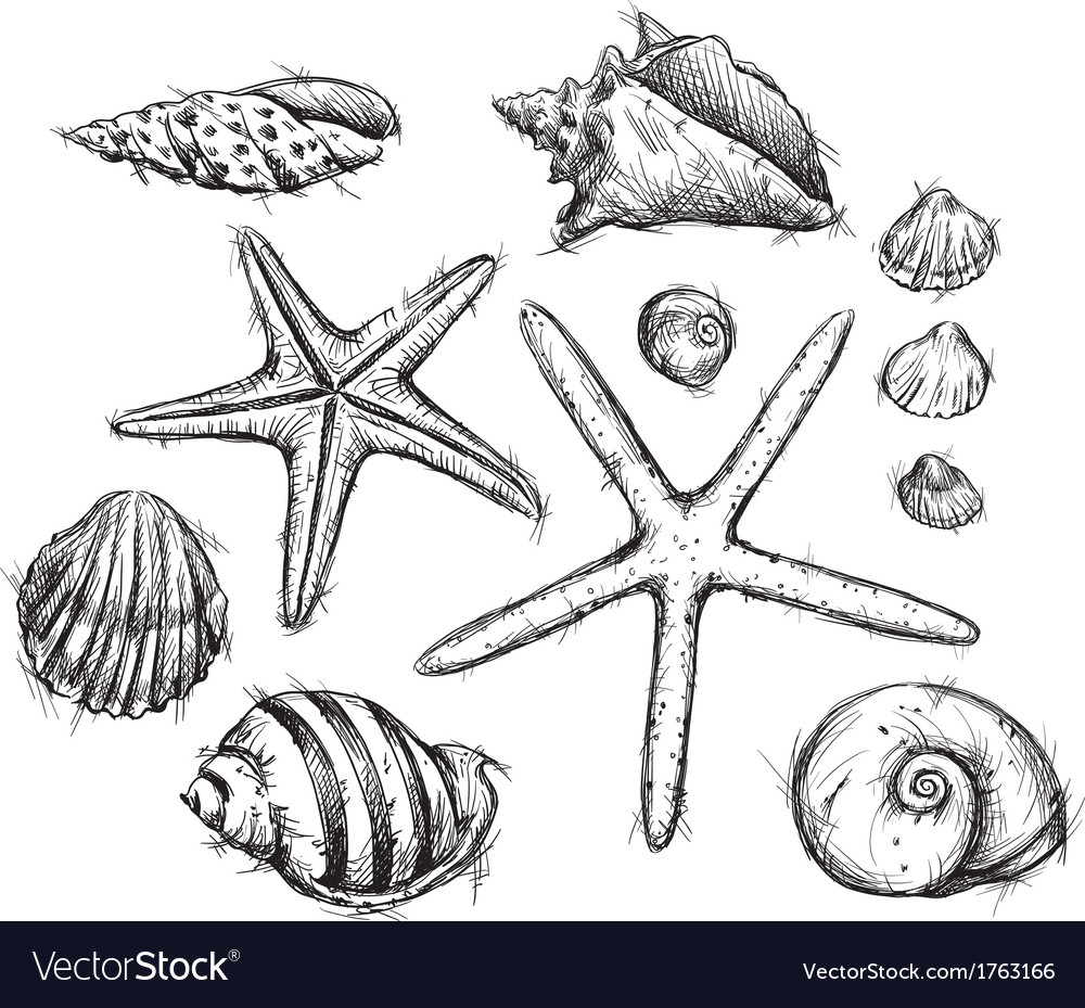 Selection of sea shells drawings vector image