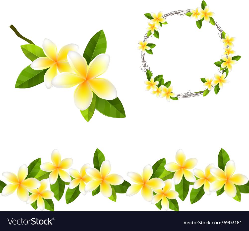 Blossoming branch of frangipani tree Endless vector image