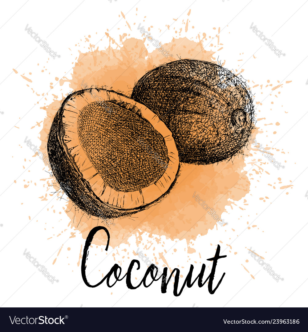 Coconut in hand drawn graphics