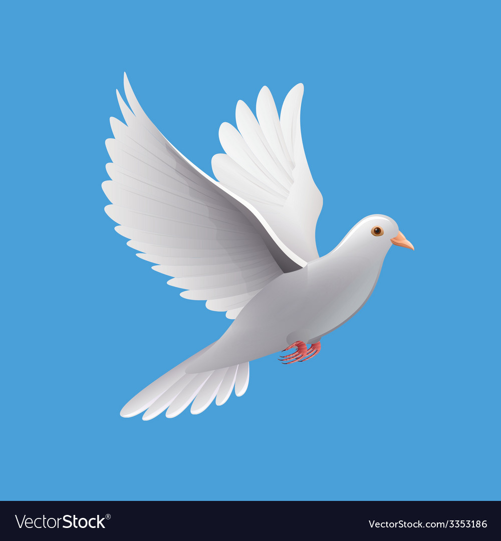 Flying dove isolated on blue