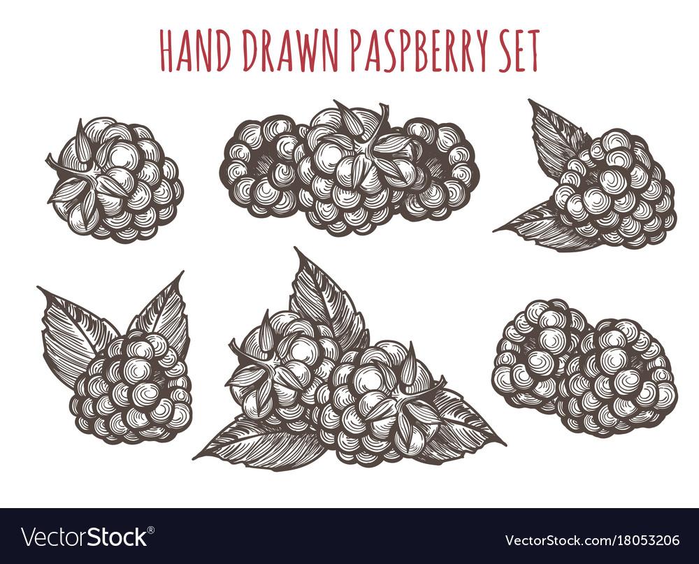 Sketch style raspberry icons set