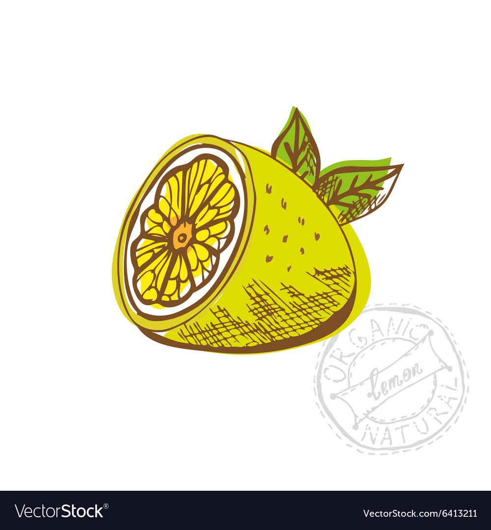 Hand drawn lemon fruit vector image