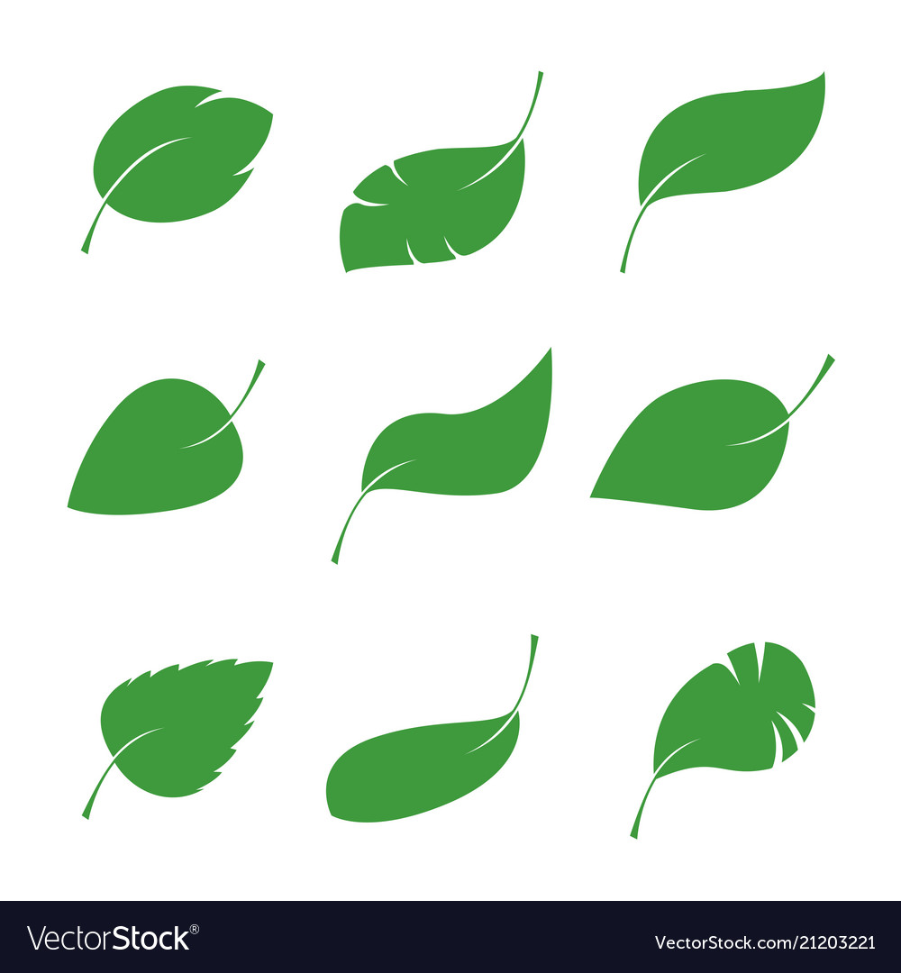 set of isalated green leaves royalty free vector image rh vectorstock com victor leaves yuuri vector leaves free