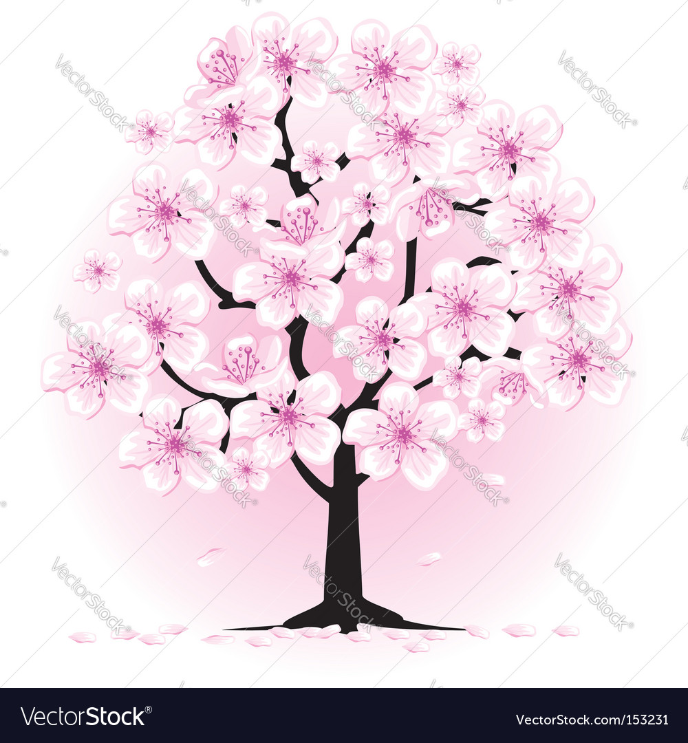 cherry tree drawing in blossom. cherry tree drawing. Blossom