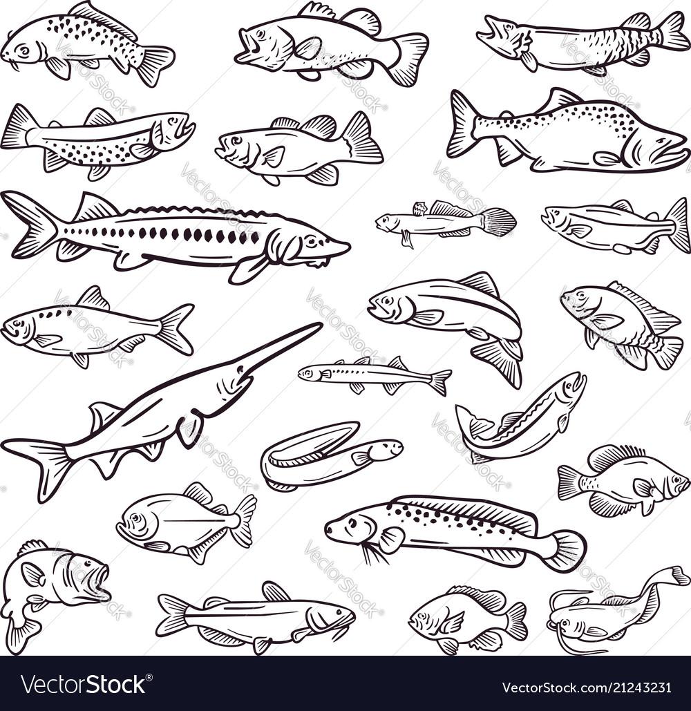 Kind of sea food sea fish hand drawn collection