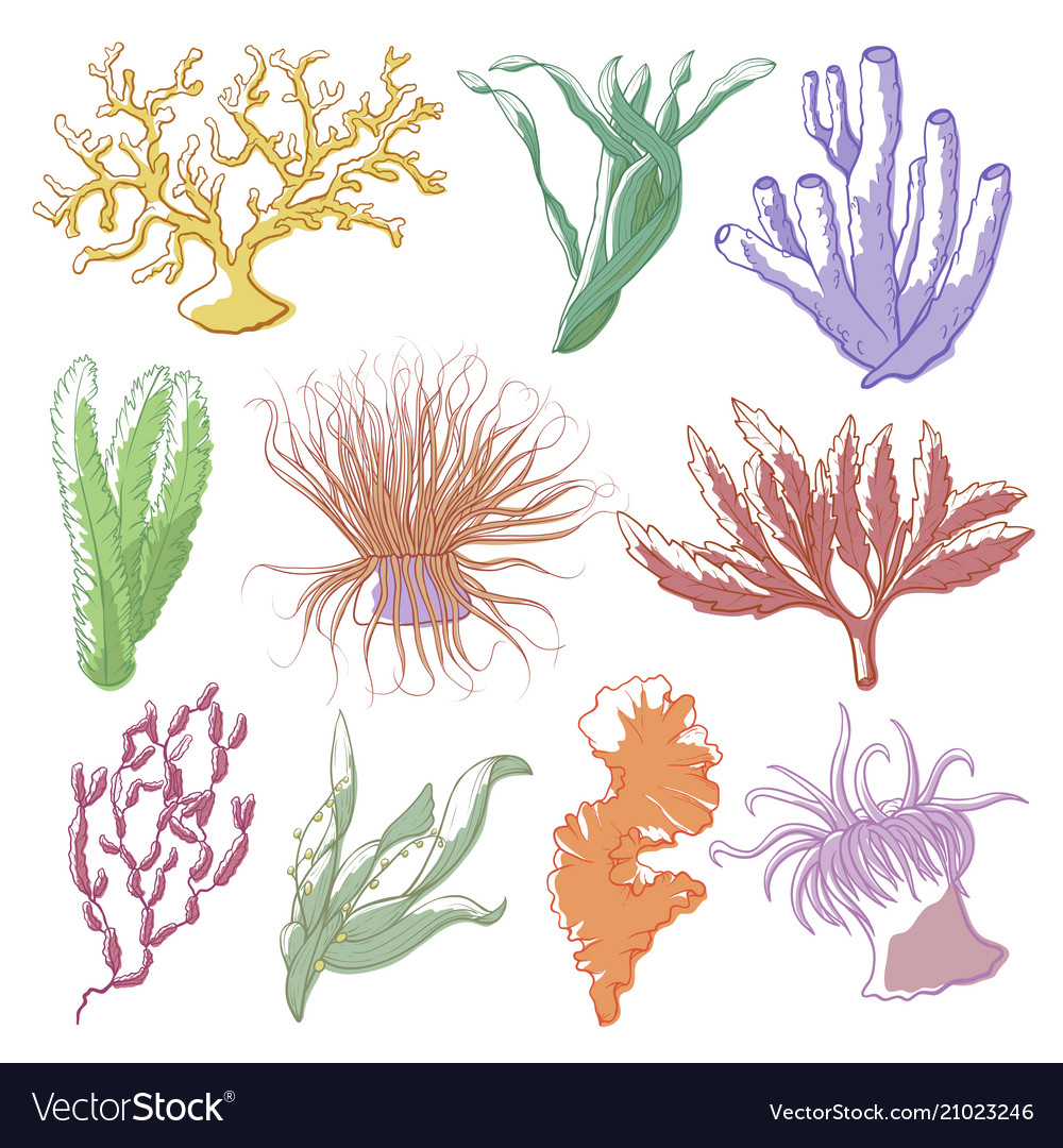Seaweed and coral set