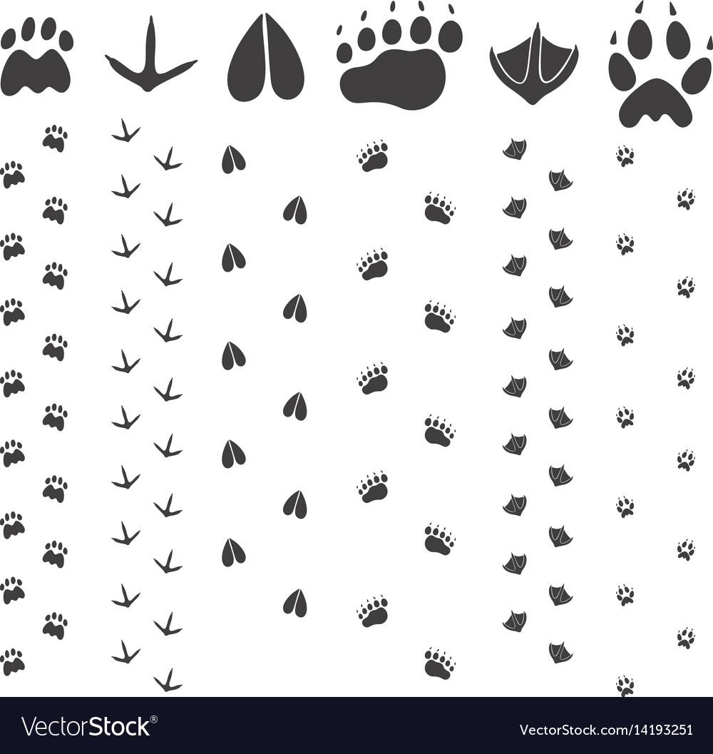 Paw print vector image