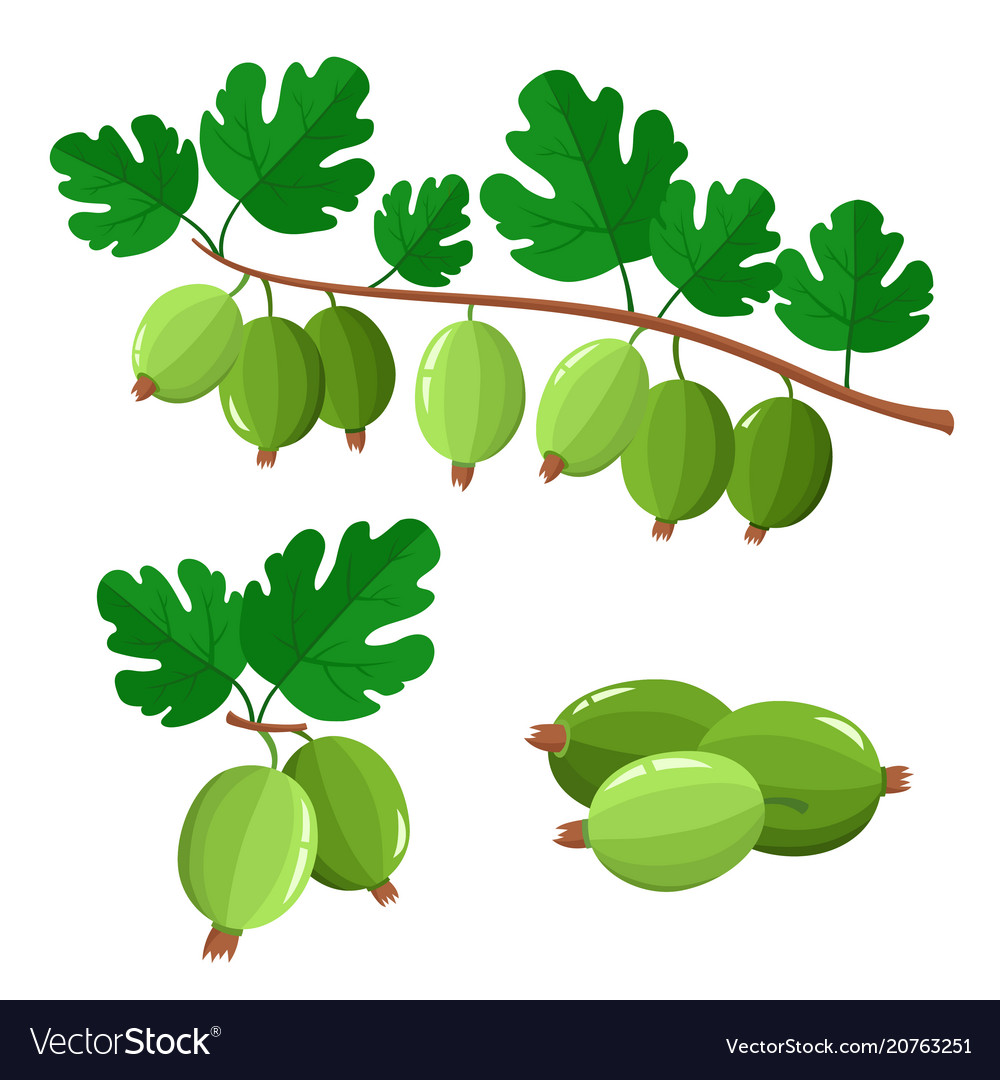 Set of cartoon juicy gooseberry with green leaves