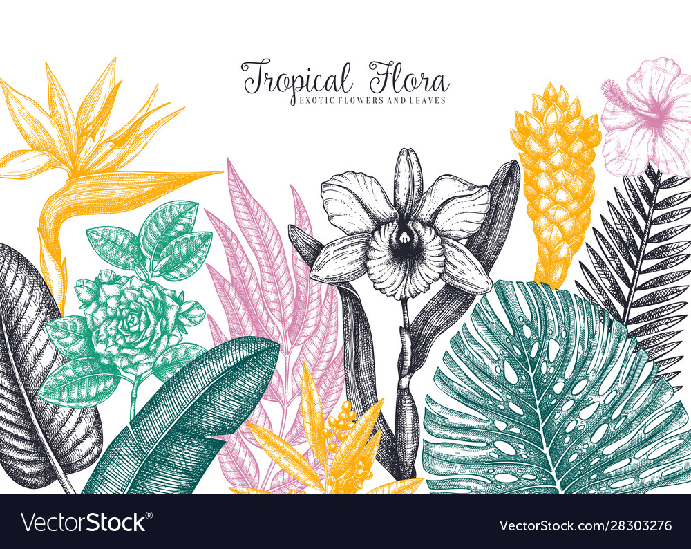 Exotic flora frame tropical plants exotic flowers