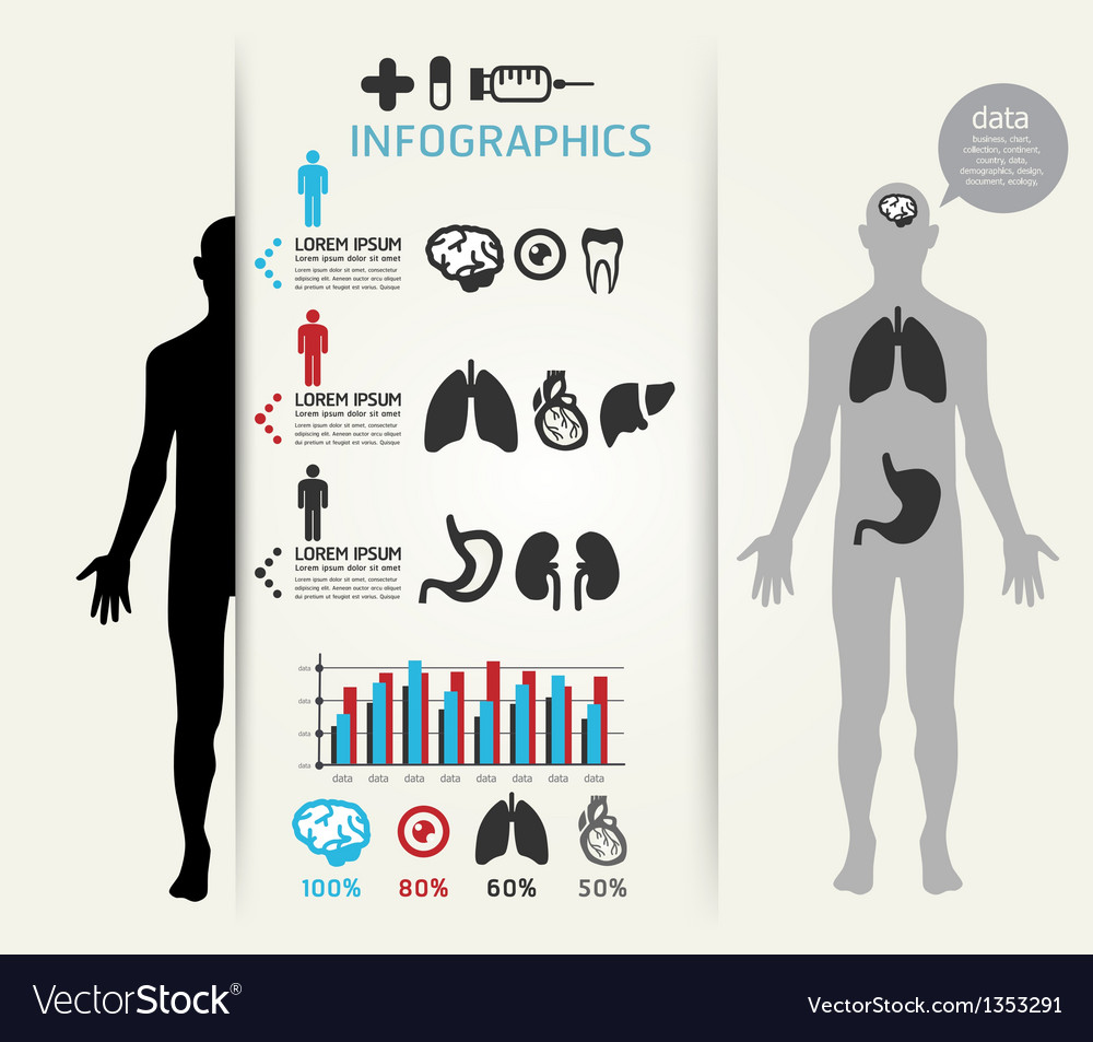 Infographic human body vector image