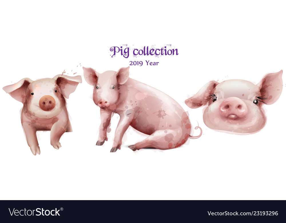 Cute pigs icon set in watercolor pig new