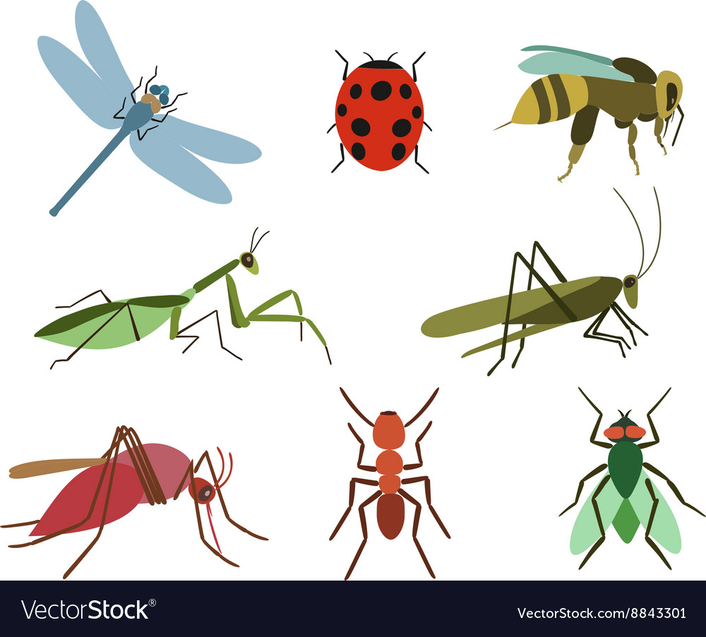 Set insects