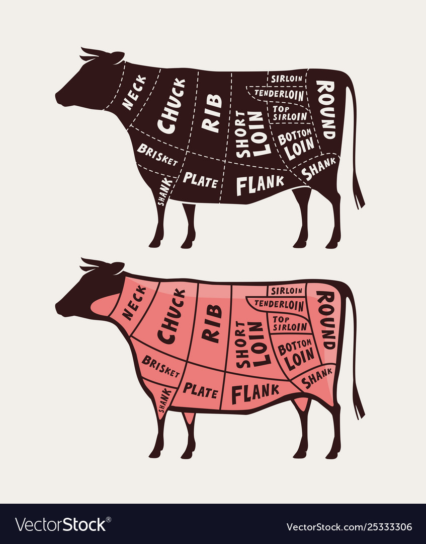 beef diagram poster wiring diagrams sort  cattle body unlabeled diagram #13