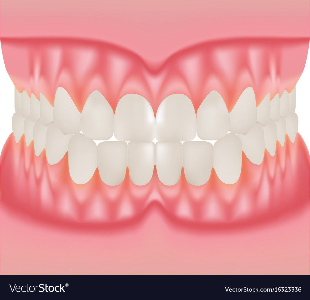 Dentures with white teeth dentition the gums of