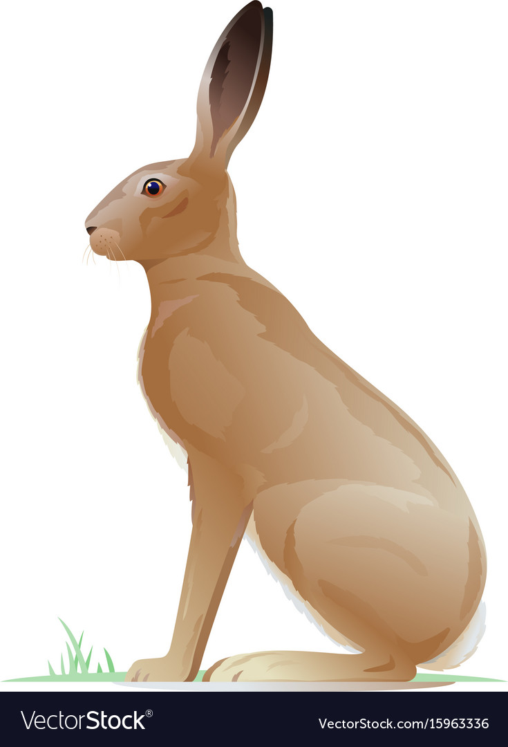 One brown hare vector image