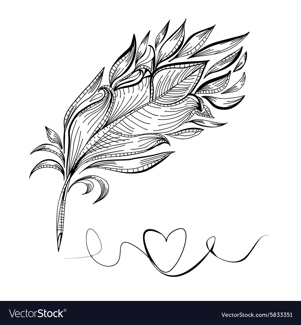 Drawing a bird feather line vector image