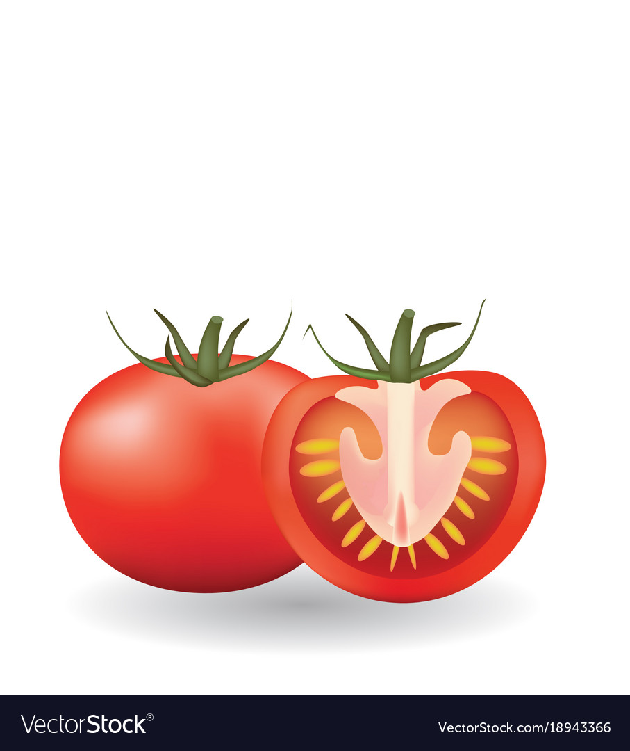 one whole and one sliced tomato royalty free vector image