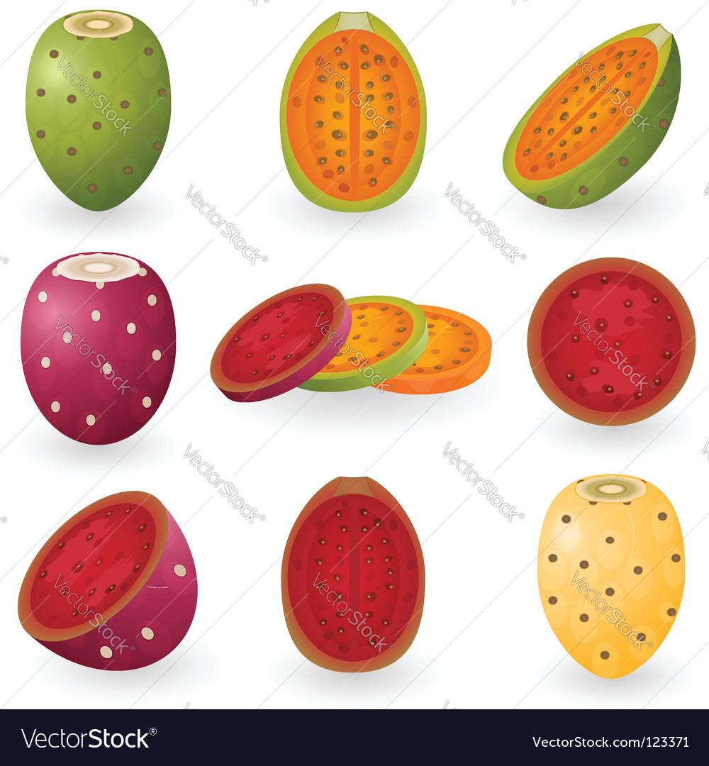 Prickly pear vector image