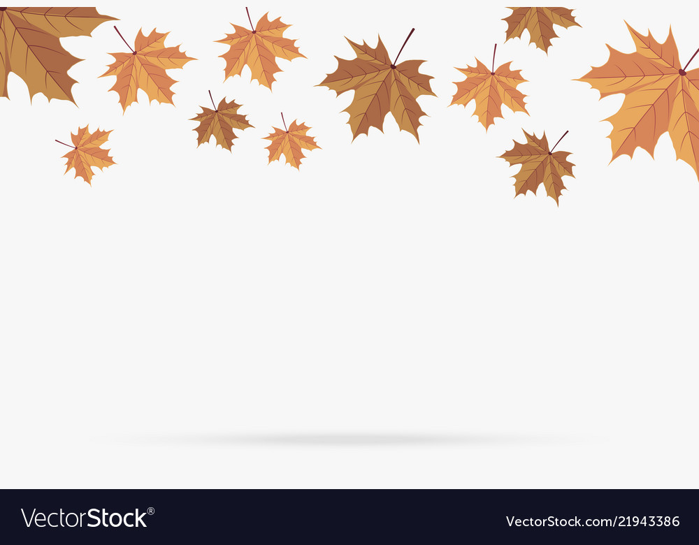 Autumn brown maple leaf fall isolated on white