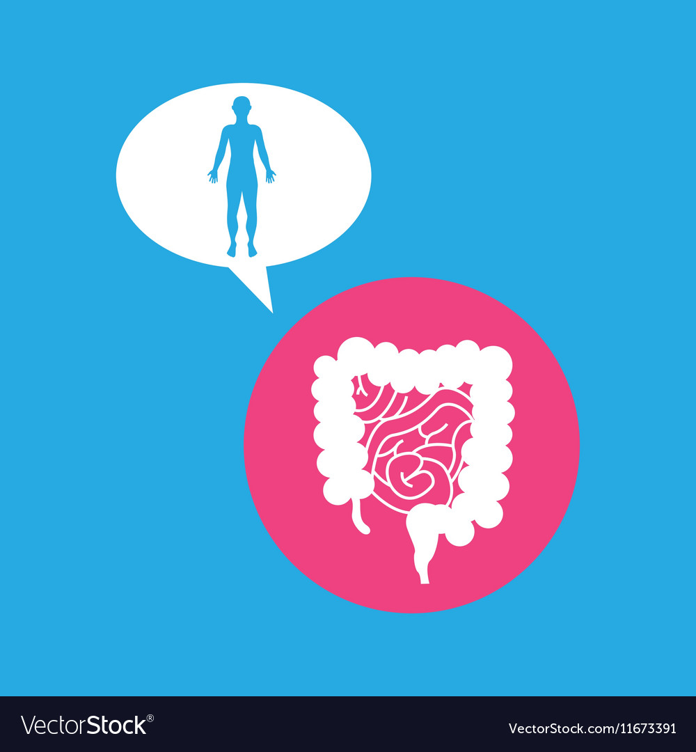 Silhouette man intestine anatomy body vector image