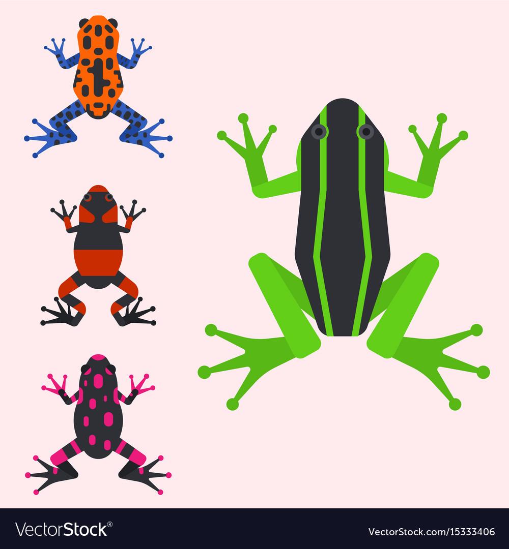 Frog cartoon tropical animal cartoon amphibian