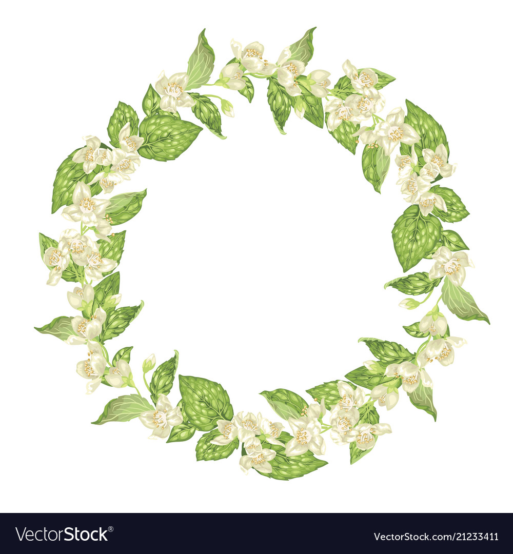 Circle Wreath With Jasmine Flowers In Graphic Vector Image