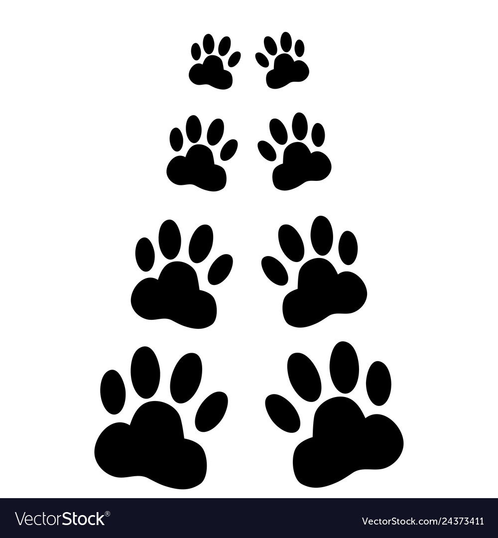 Dog paws following on a white background Vector Image