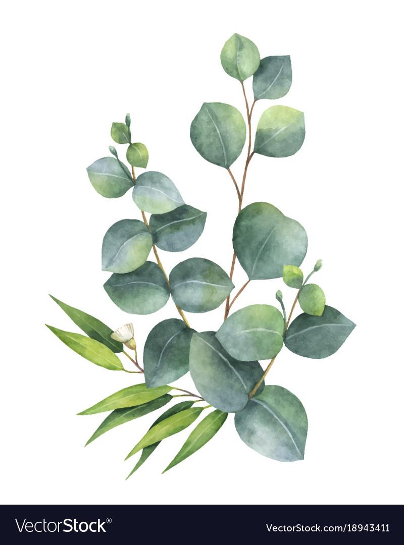 Watercolor bouquet with green eucalyptus vector image