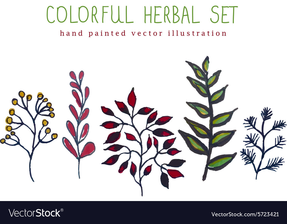 Colorful hand painted herbal set