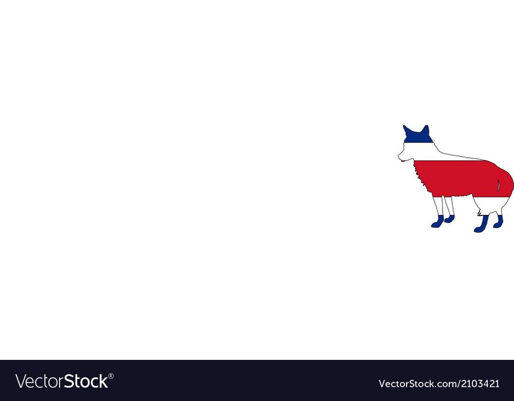 Coyote Costa Rica vector image