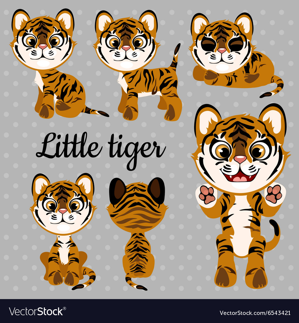 Emotions baby tiger on a gray background