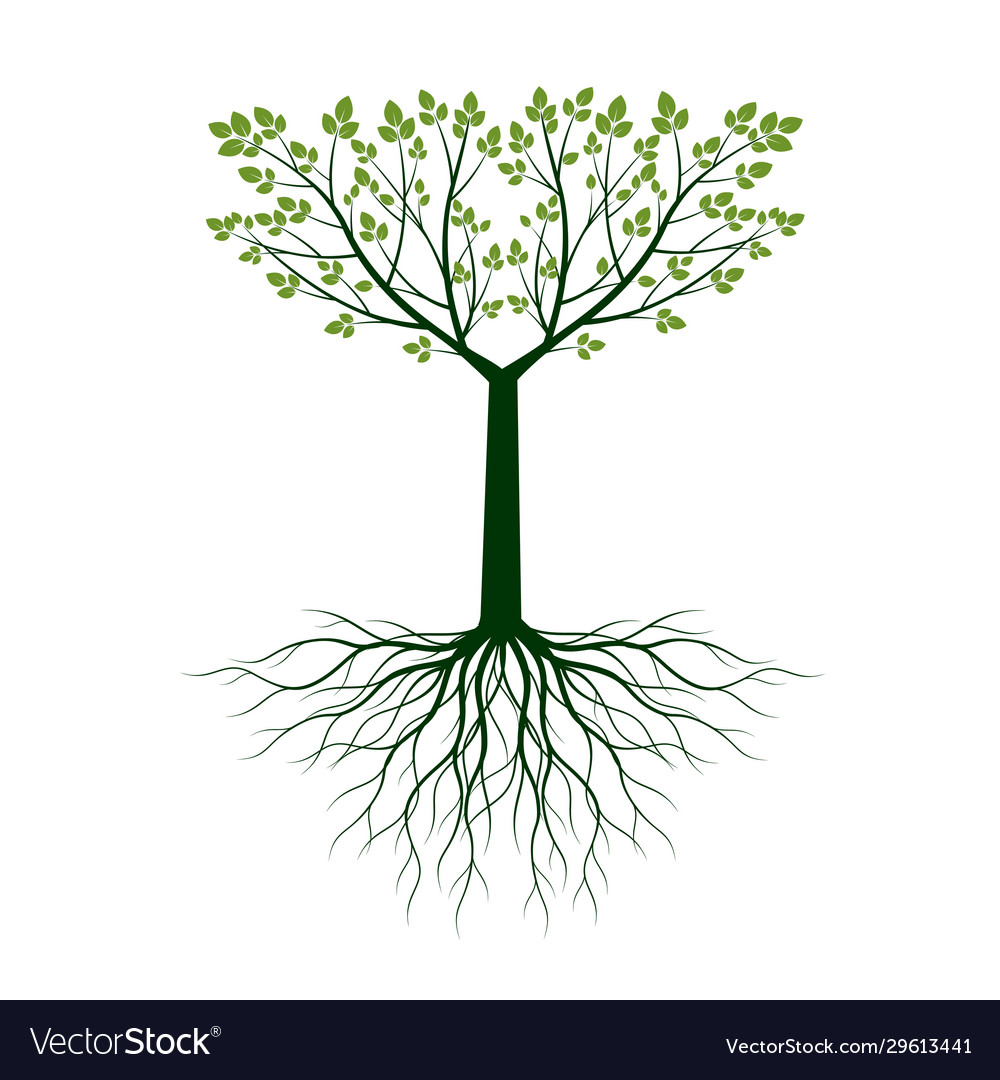 Green tree with leaves and roots outline